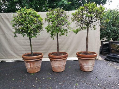 A Set Of Three Large Size French Imported Terracotta Pots/Planters