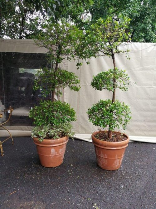 A Set Of Two Large Size French Imported Terracotta Pots/Planters
