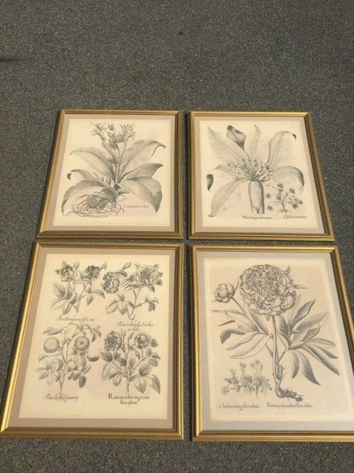 Set of 4 Botanical Prints - ND